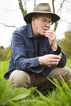 A forager tasting a fresh leaf or plant, England, United Kingdom