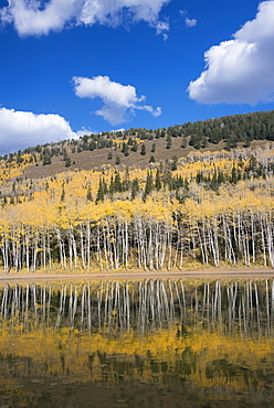 View over the Aspen trees and a wooded hillside at Silver Lake, Wasatch Mountains, Utah, United States