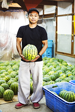 Worker in a greenhouse holding a watermelon, Japan