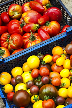 Crate of fresh ripe tomatoes, varieties with red, yellow and dark red skin.