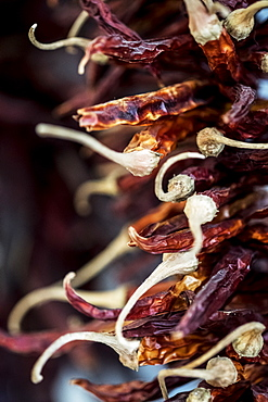 Close up of small bunch of dried red chilies