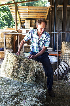Farmer stacking hay bales in a barn, Oxfordshire, England