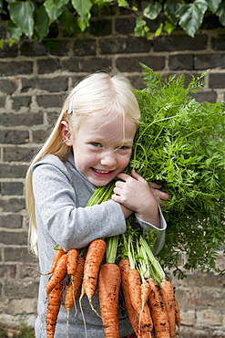 A young girl holding a large bunch of carrots.