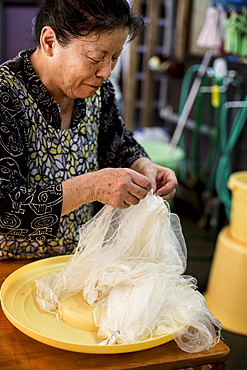 Japanese woman standing in a textile plant dye workshop, holding piece of sheer white fabric, Kyushu, Japan