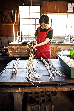 Woman standing at a table in a traditional Washi workshop, stripping bark and fibre off twigs and branches of plant material , Kyushu, Japan