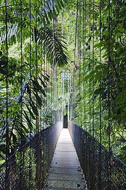 Footbridge in Costa Rican Forest, Arenal, Costa Rica
