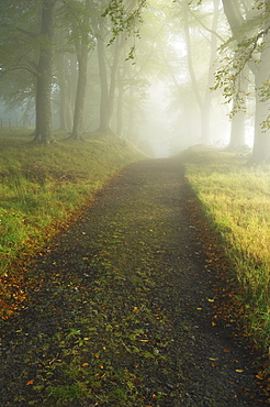 Trail Through Forest, Ross-shire, Scotland, UK