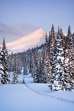 Snowy Landscape, British Columbia, Canada