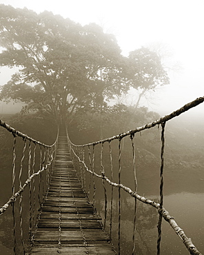 Fog surrounding trees and footbridge, Sapa, Vietnam