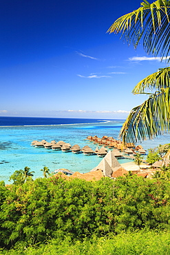 Palm trees overlooking tropical resort, Bora Bora, French Polynesia, Bora Bora, Bora Bora, French Polynesia