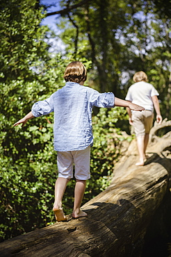 Two boys camping in the New Forest. Walking along a log above the water, balancing with their arms outstretched, Hampshire, England