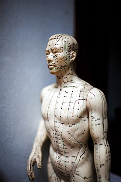 Close up of male acupuncture dummy showing pressure points used by practitioners of traditional Asian medicine, Vietnam