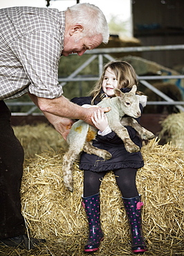 A girl holding a small new-born lamb, Wimborne, Dorset, England