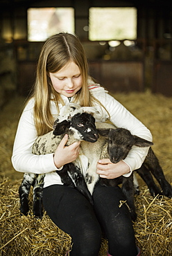 A girl holding two small lambs, Wimborne, Dorset, England