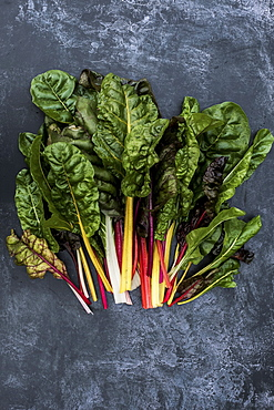High angle close up of a bunch of freshly picked Swiss rainbow chard on grey background, Oxfordshire, United Kingdom