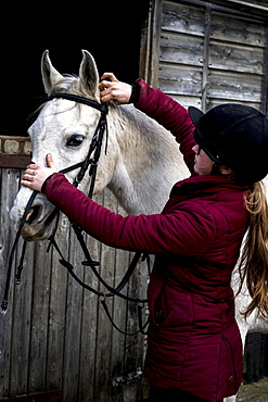 Young woman standing outside stable, putting bridle on white Cob horse, Berkshire, United Kingdom
