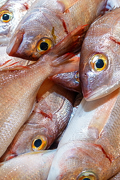 Fresh Bica fish in Portugese fish market, Algarve, Potugal