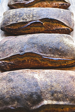 Baked soughdough bread loaves with a dark crust