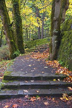 A path and steps through the woodland in the Columbia River Gorge, Columbia River Gorge, Oregon, USA