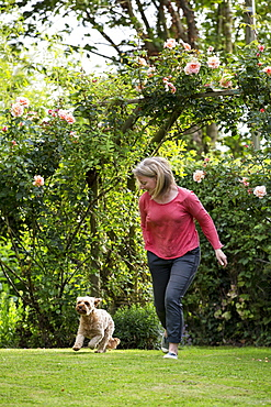 Woman standing in a garden, playing with red coated young Cavapoo, Watlington, Oxfordshire, United Kingdom