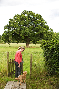 Woman walking in meadow with red coated young Cavapoo, Watlington, Oxfordshire, United Kingdom