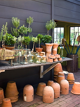 A group of clay pots with cuttings and seedlings for overwintering, Maryland, USA