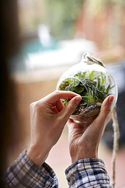 Close up of woman's hands caring for plants in glass terrarium, Bristol, United Kingdom