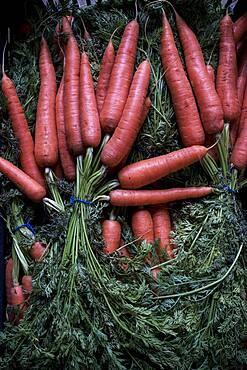 High angle close up of bunches of freshly picked carrots, Oxfordshire, United Kingdom