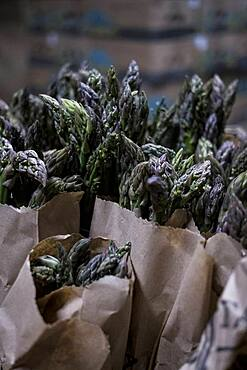High angle close up of green and purple asparagus in paper bags, Oxfordshire, United Kingdom