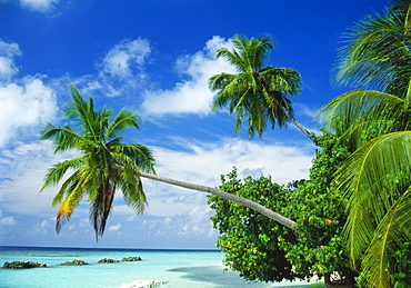 Beach and Palm Trees by the Indian Ocean at Nakatchafushi, North Male Atoll, Maldives