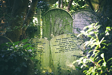 Gravestones jostling in the undergrowth, away from the main path, Highgate Cemetery west, London, England, United Kingdom, Europe