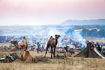 Pushkar Camel Fair, Pushkar, Rajasthan, India, Asia