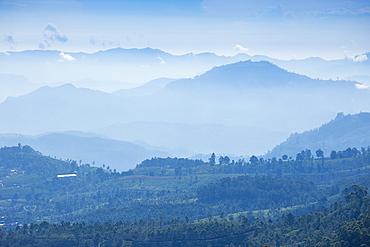 Heritance tea estate, Nuwara Eliya, Central Province, Sri Lanka, Asia