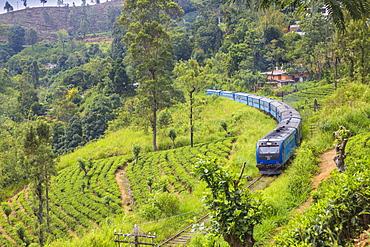 Kandy to Badulla train alongside tea estate near Nuwara Eliya, Nuwara Eliya, Central Province, Sri Lanka, Asia