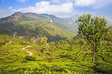 View of tea estate and Attukad Waterfalls, Munnar, Kerala, India, Asia