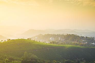 View over tea estates at sunrise, Munnar, Kerala, India, Asia