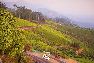 Road winding through Munnar tea estates, Munnar, Kerala, India, Asia