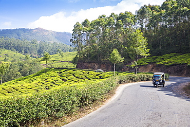 Auto rickshaw on road passing by Tea estate, Munnar, Kerala, India, Asia