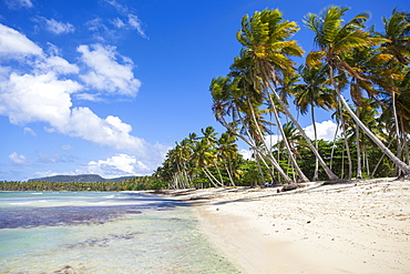 Playa Rincon, Samana Peninsula, Dominican Republic, West Indies, Caribbean, Central America