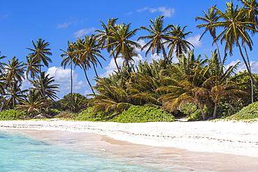 Playa Blanca, Punta Cana, Dominican Republic, West Indies, Caribbean, Central America