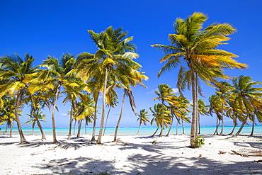 Cap Cana Beach, Punta Cana, Dominican Republic, West Indies, Caribbean, Central America
