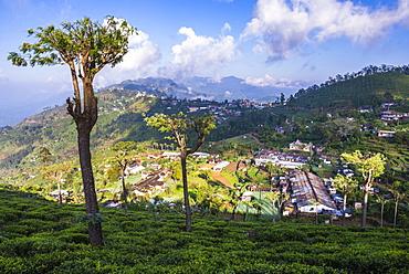 Haputale and a tea estate, Sri Lanka Hill Country, Nuwara Eliya District, Sri Lanka, Asia