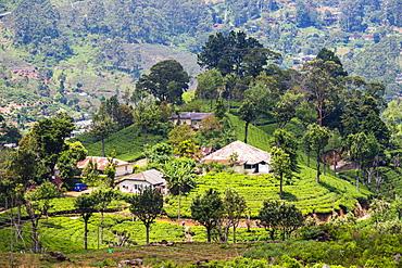 Houses on a tea estate in Haputale, Sri Lanka Hill Country, Sri Lanka, Asia
