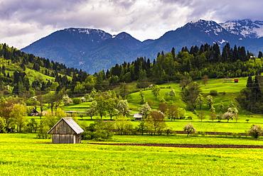 Typical Slovenian landscape between Lake Bled and Lake Bohinj, Triglav National Park, Julian Alps, Slovenia, Europe
