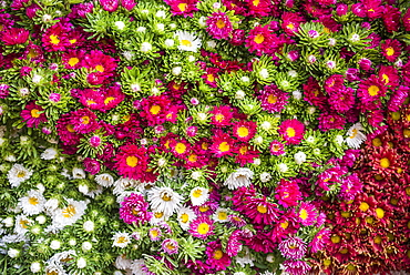 Flowers for sale at Hsipaw (Thibaw) market, Shan State, Myanmar (Burma), Asia