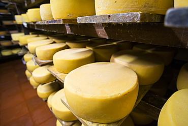 Cheese maturing on a traditional Ecuadorian Hacienda Zuleta, Imbabura, Ecuador, South America