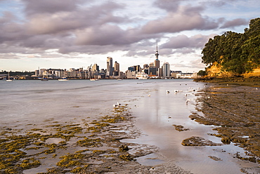 Auckland skyline at sunrise, Auckland, North Island, New Zealand, Pacific