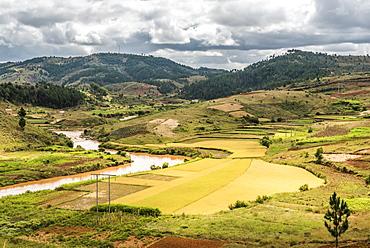 Rice paddy field scenery near Antananarivo, Antananarivo Province, Eastern Madagascar, Africa