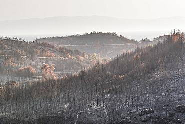 Wild fire damage, Spetses, Saronic Islands, Attica Region, Aegean Coast, Greek Islands, Greece, Europe