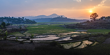 Rice paddy fields landscape at sunset, near Ranomafana, Haute Matsiatra Region, Madagascar, Africa